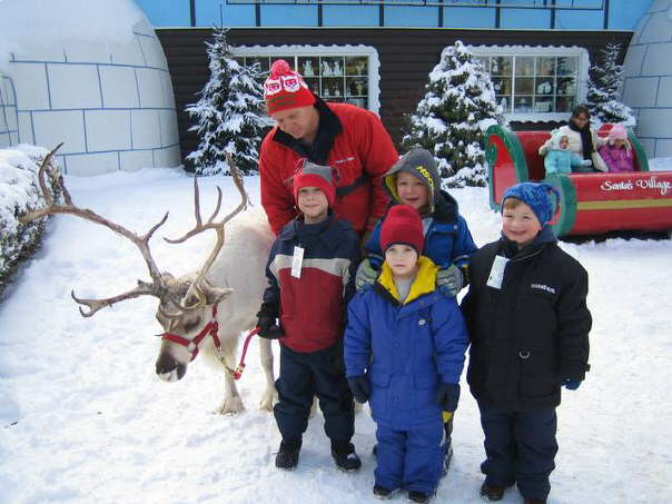 Reindeer Group Shot